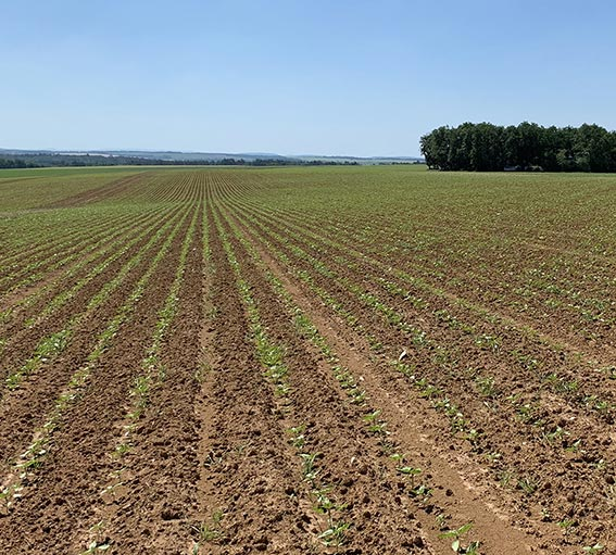 Organic cereals large crops for 20 years